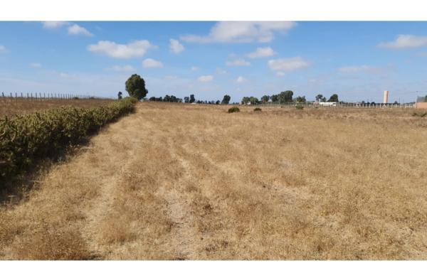 Vente d'un terrain agricole constructible à Benslimane Bssabes